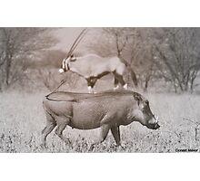 Kalahari Neighbors Photographic Print