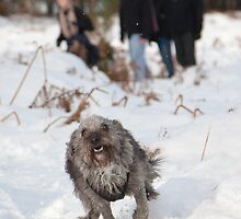 Ollie Pup Running in the Snow by Natalie Kinnear