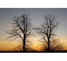 December sky at dusk - two trees Photographic Print