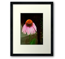 Cone Flower © Framed Print