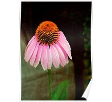 Cone Flower © Poster