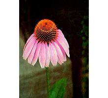 Cone Flower © Photographic Print
