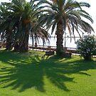 Palms by inglesina