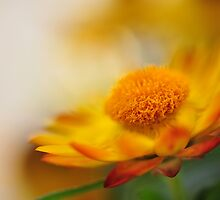 Yellow Summer by arybus