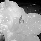 Diamond Lily © by Dawn M. Becker