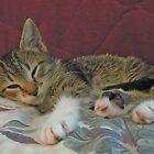 Lil' Taffy Kitten Takes a Nap by Vivian Eagleson