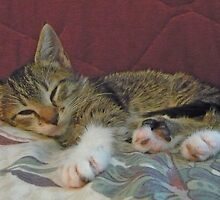 Lil' Taffy Kitten Takes a Nap by Vivian Eagleson