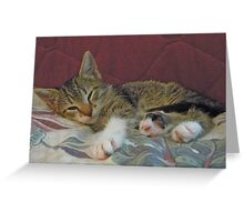 Lil' Taffy Kitten Takes a Nap Greeting Card