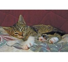 Lil' Taffy Kitten Takes a Nap Photographic Print