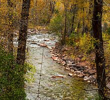 Trout Fishing Stream Crossing Swing by Bo Insogna