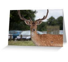 Did someone say Bambi? Greeting Card