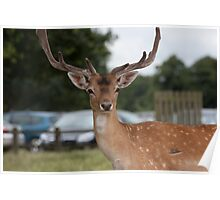Did someone say Bambi? Poster
