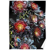 Succulant Black Roses Poster