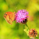 Meadow Brown Butterfly ( Maniola Jurtina) on Knapweed, Darlington,England by Ian Alex Blease