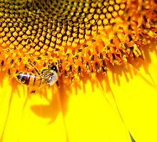 Let there bee yellow by Javimage