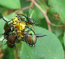 Beetle Buffet by kkeene