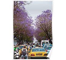 Greece. Athens. Busy street of Jacaranda trees. Poster