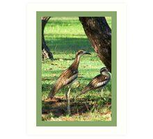 Curlews  Art Print