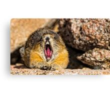 The Secret to Making a Pika Yawn on Cue Canvas Print