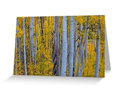 Beautiful Fall Forest Greeting Card