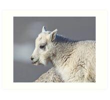 Mt Goat Kid 1 Art Print