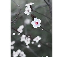 Early Spring Flower Photographic Print