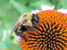 Busy Bee by Ginny York