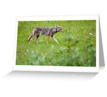 Banff Coyote Greeting Card