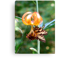 Tiger Lily and Swallowtail Canvas Print