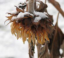 Sad Sunflower by Kathi Huff