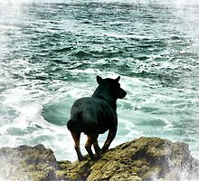 Augie waits for Dad. by Lynne Haselden