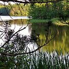 Lake Michele #1 by AuntieJ