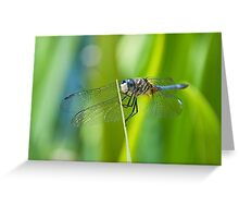 Stained Glass Wings Greeting Card