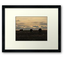 Highlighted Cows Framed Print