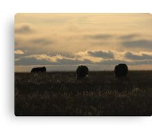 Highlighted Cows Canvas Print