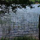Island Lake #1 by AuntieJ
