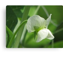 Pea Flower Canvas Print