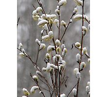 Spring Snow Photographic Print