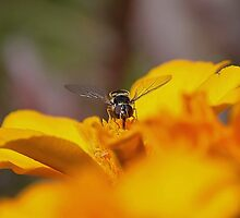 Wasp'time is it ? by Joel Fourcard