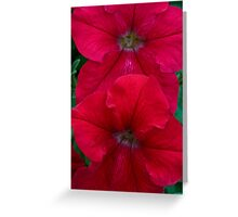 Red Petunia Duet Greeting Card