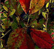 Autumn Gifts... by linmarie