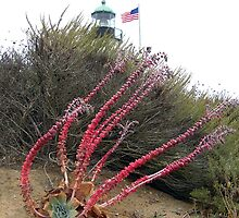 On the Sands At Cabrillo National Monument by Carla Wick/Jandelle Petters