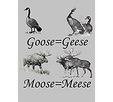 Moose Meese Photographic Print
