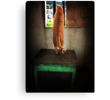 Cat In Window Canvas Print