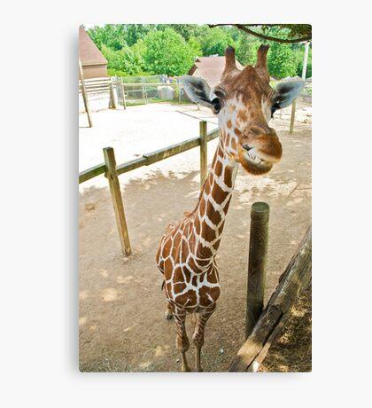 Who said giraffes can't smile? Canvas Print