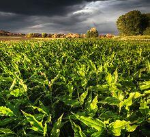 Leaf Light by Bob Larson