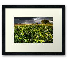 Leaf Light Framed Print