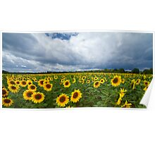 sunflowers before thunderstorm Poster