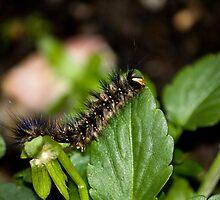 Caterpillar Heaven by reflector