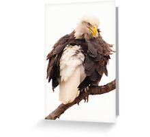 upset bald eagle Greeting Card